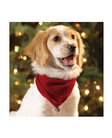 Outward Hound Holiday Pet Bandana Large