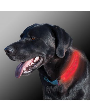 Nite Ize Nite Dawg LED Illuminated Dog Collar Cover