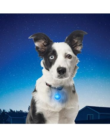 Nite Ize SpotLit LED Dog Tag Light