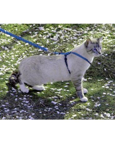 Come With Me Kitty Harness & Leash Combo