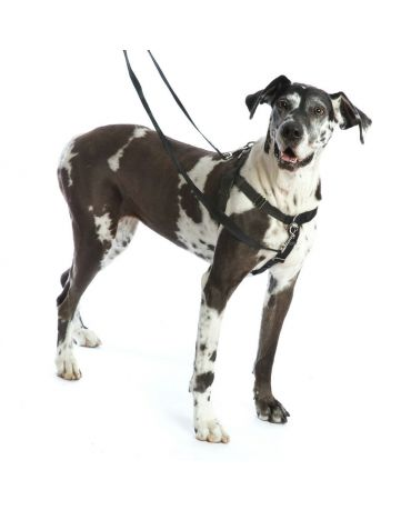Freedom No-Pull Dog Harness Set